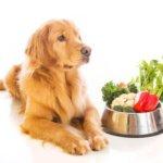 Hund_Fressen_Gemüse