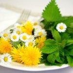 herbs-5140754_640