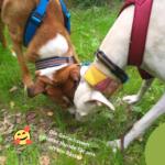 Die Geruchswelt unserer Hunde