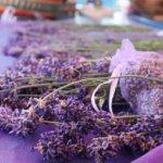 lavender-5292056_640