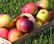 apple-3605415_640