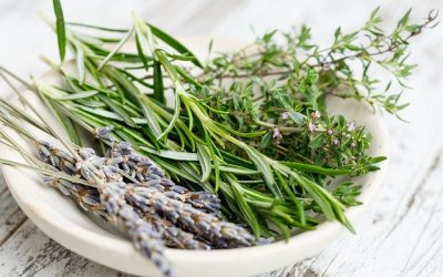 herbs-2523119_640