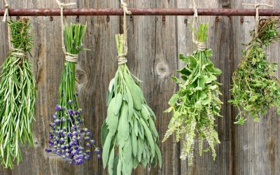 C8JHXD herbs